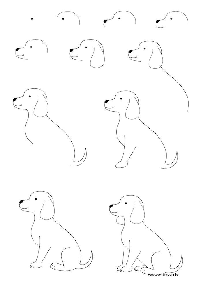 Come disegnare un cane, disegno di un cagnolino, tutorial disegno a matita
