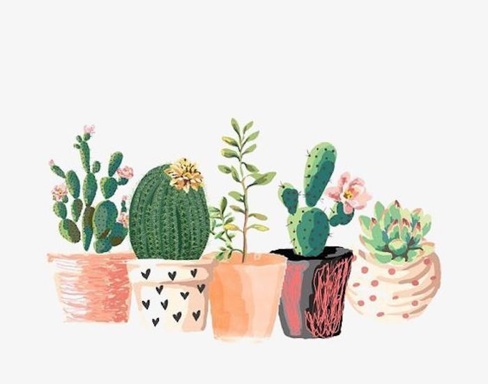 Disegni da copiare facili e belli, vasi con piante grasse, dipinto con acrilici