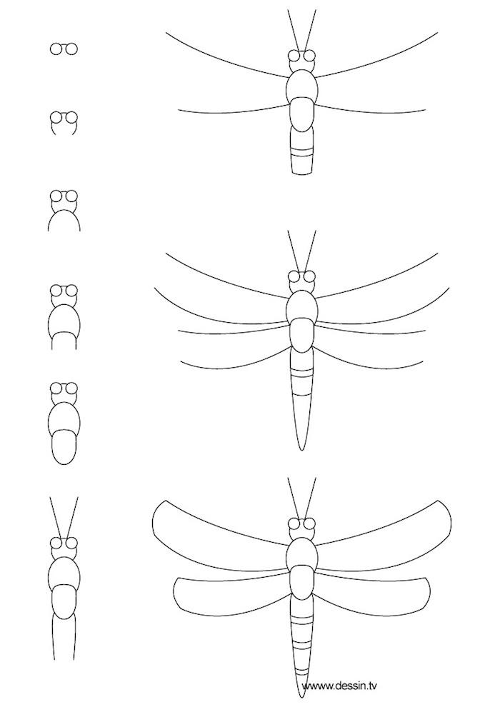 Disegno di un insetto, disegno a matita, tutorial disegno con matita