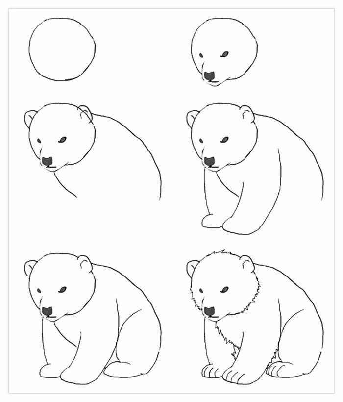 Tutorial disegno orso, disegno a matita, immagini da disegnare facili