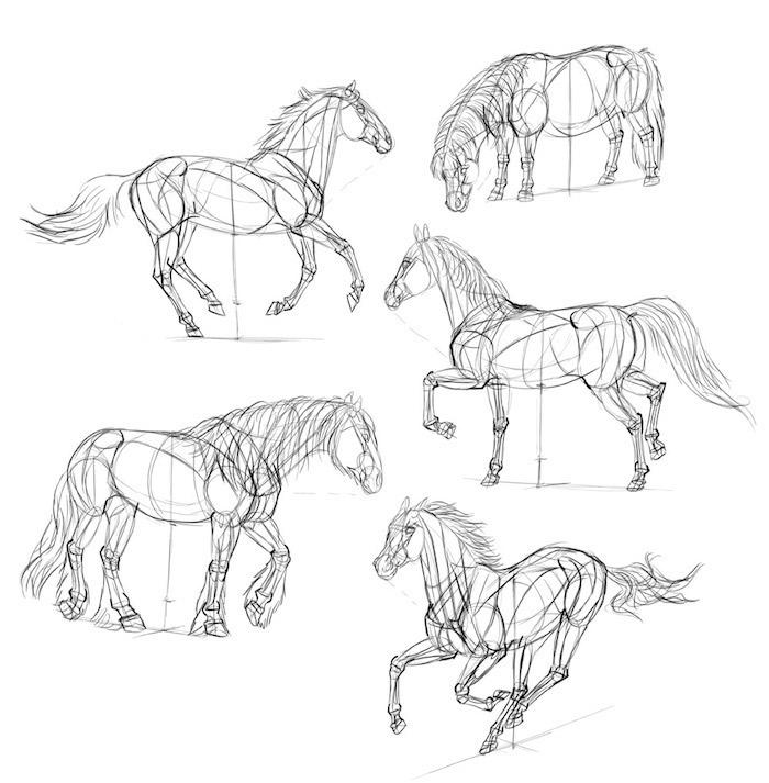 Schizzo a matita, disegno di un cavallo, come si disegna un cavallo