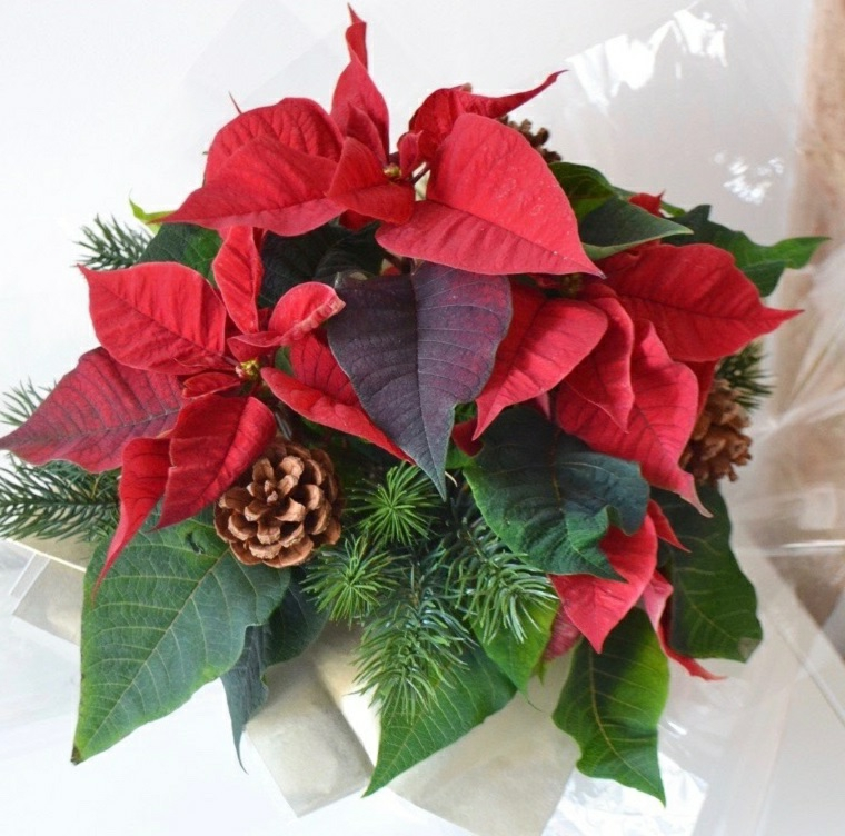 Piante stella di Natale, decorazione con pigne e rametti, addobbi di Natale fai da te