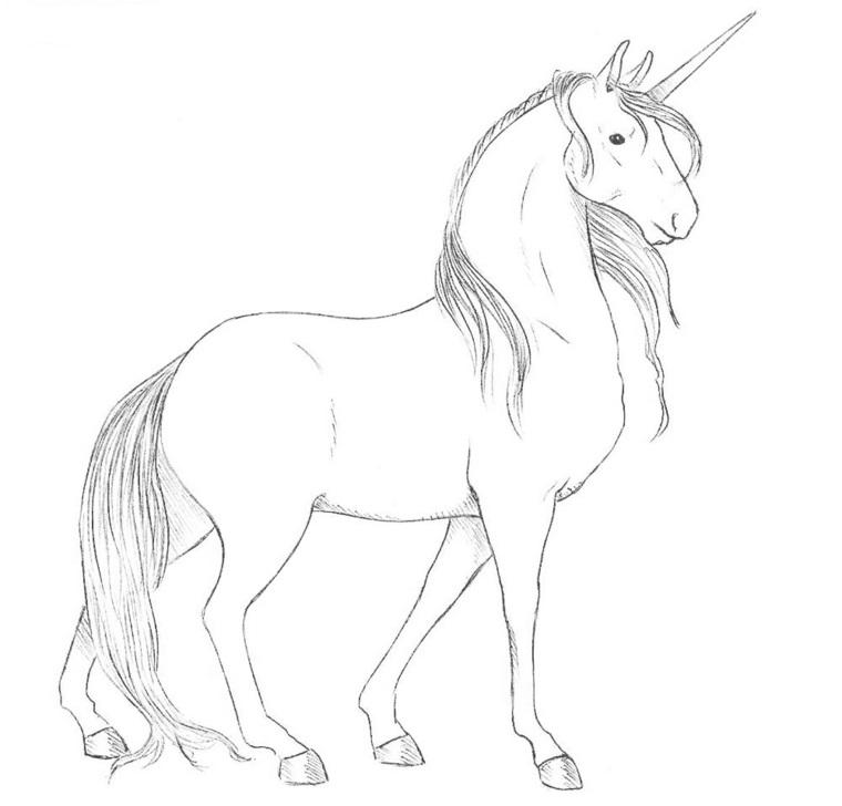 Disegni Da Colorare Di Un Cavallo.1001 Idee Per Unicorno Disegno Da Colorare E Non