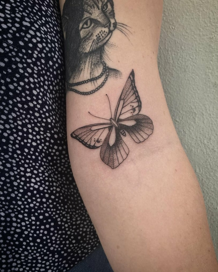 Farfalla significato, disegno di una farfalla colorata, tatuaggio di un gatto