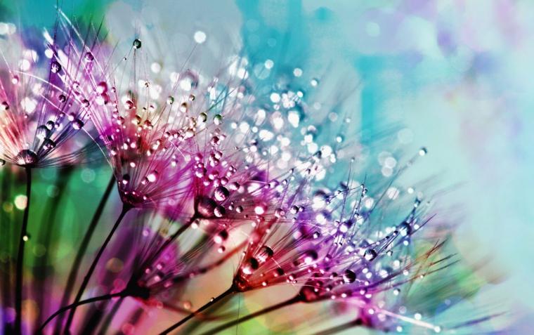 Foto per lo schermo del computer, immagine di fiori con gocce d'acqua, immagine schermo laptop