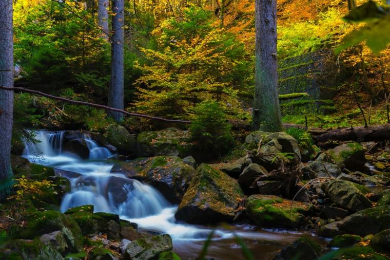Foto di un ruscello d'acqua nella foresta, foresta con alberi verdi, foto per lo desktop del computer