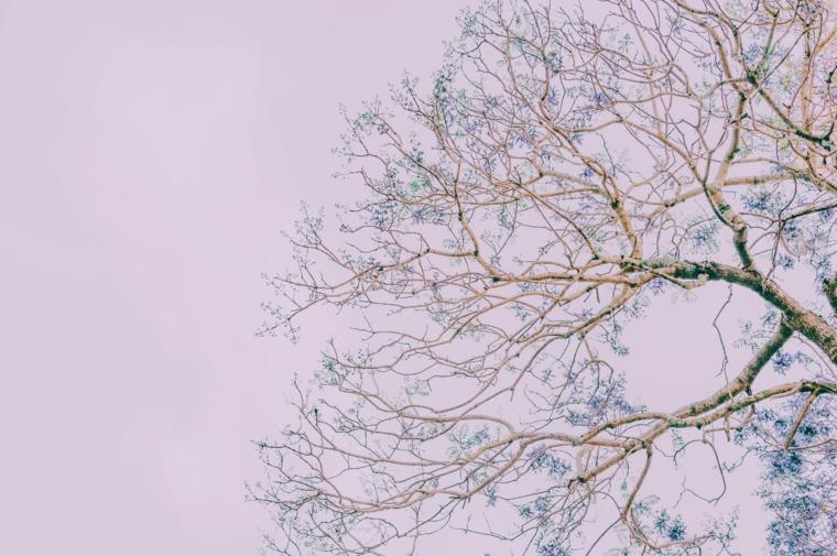 Foto per lo schermo del laptop, foto di un albero fiorito, immagine con cielo grigio