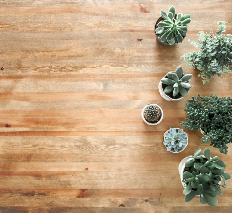 Immagine di vasi con piante grasse, foto per lo schermo del computer, sfondo immagine di legno