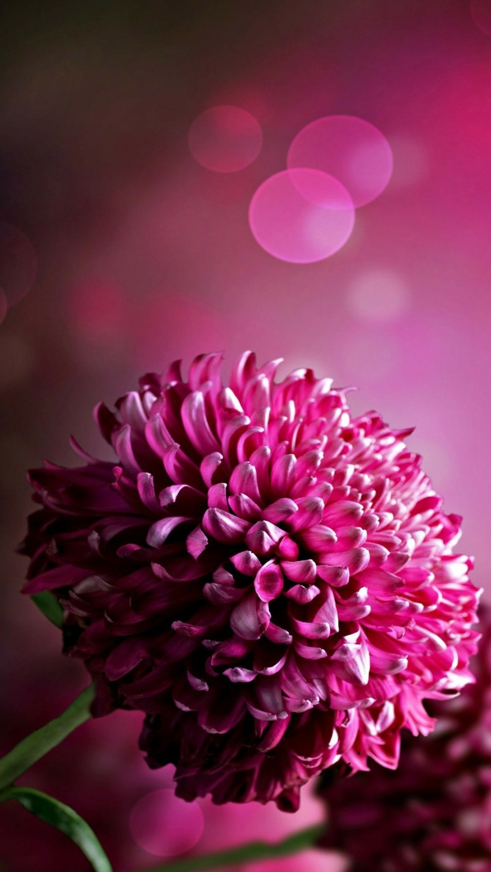 Immagini sfondo cellulare, foto di un fiore con petali di colore viola