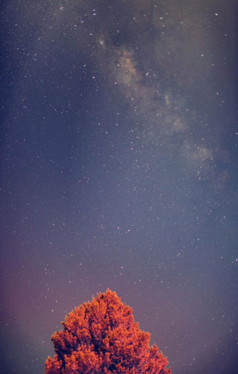 Sfondi schermata home, foto di un cielo stellato e un albero con foglie arancioni