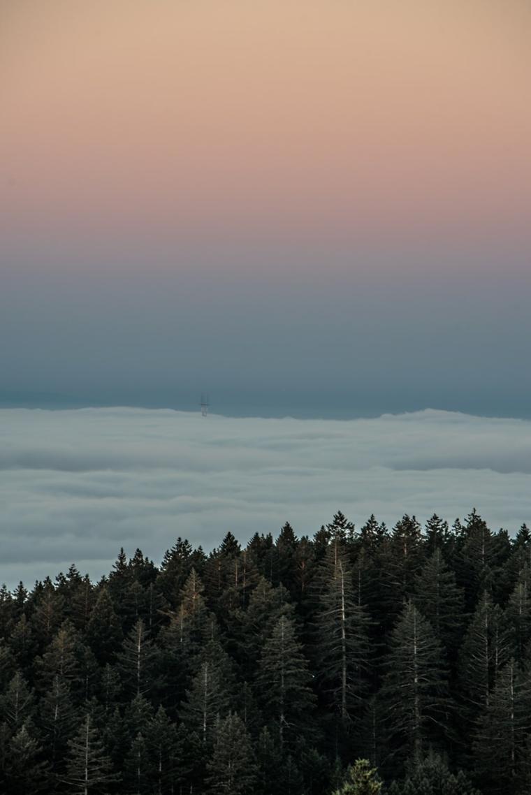 Sfondi per smartphone, foto di una foresta con un cielo blu
