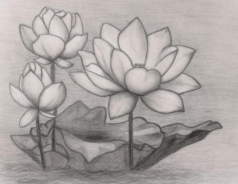 Disegno a matita di fiori di loto con sfumature, fiori disegni da colorare