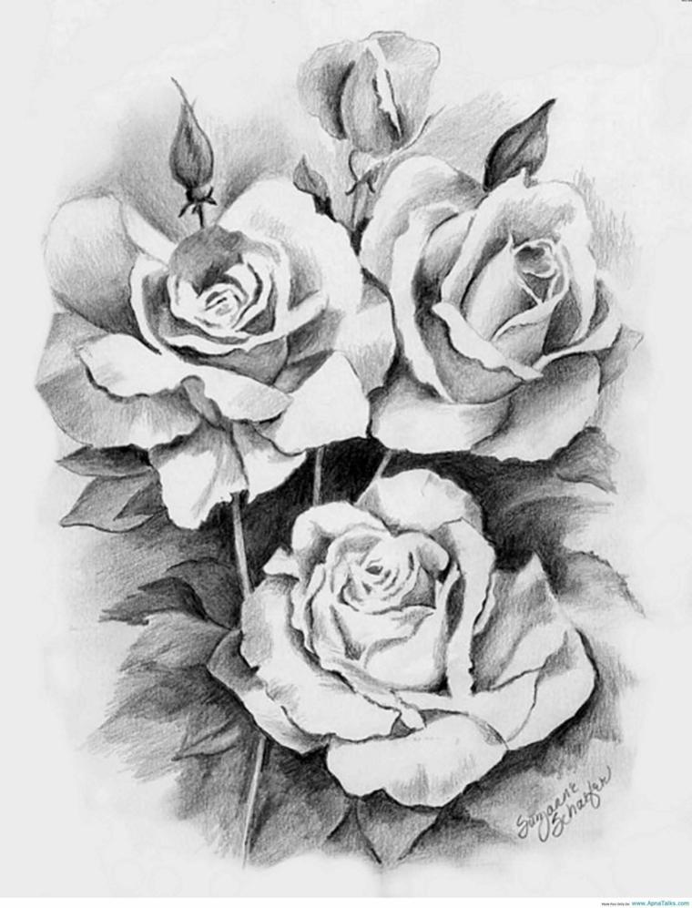 Disegno a matita con sfumature di rose, disegni da colorare fiori