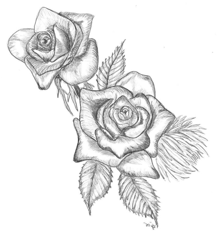 Fiori facili da colorare, disegno di due rose disegnate con matite e sfumate