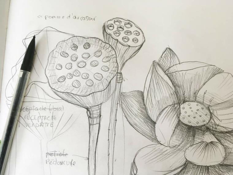 Disegno a matita con sfumature, disegno a matita di un fiore con petali