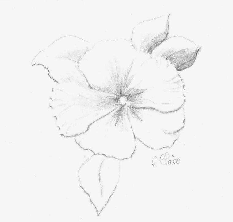 Disegno a matita di un fiore, disegno da colorare di un fiore