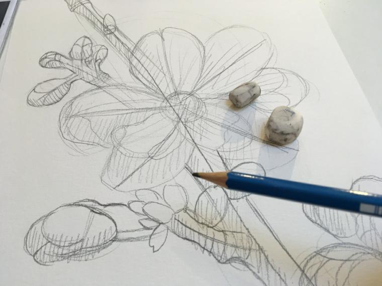 Disegno a matita di un fiore, disegno su foglio ruvido con matita e gomma da cancellare