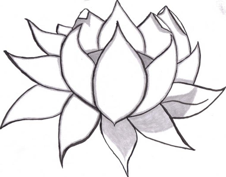 Fiori da colorare, disegno a matita con sfumature di un fiore di loto