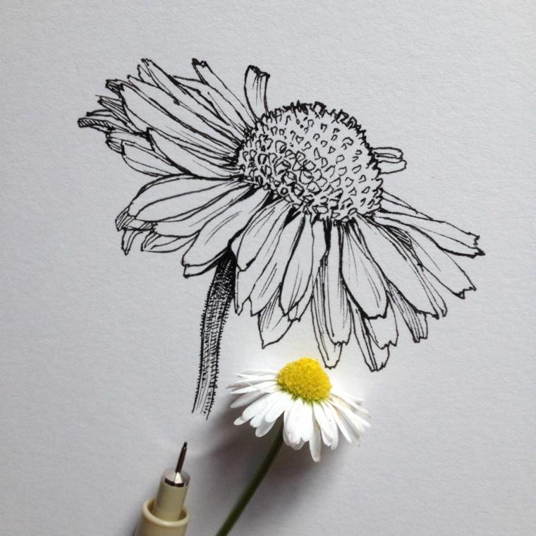 Fiore disegno da colorare, disegno a matita di una margherita con petali bianchi