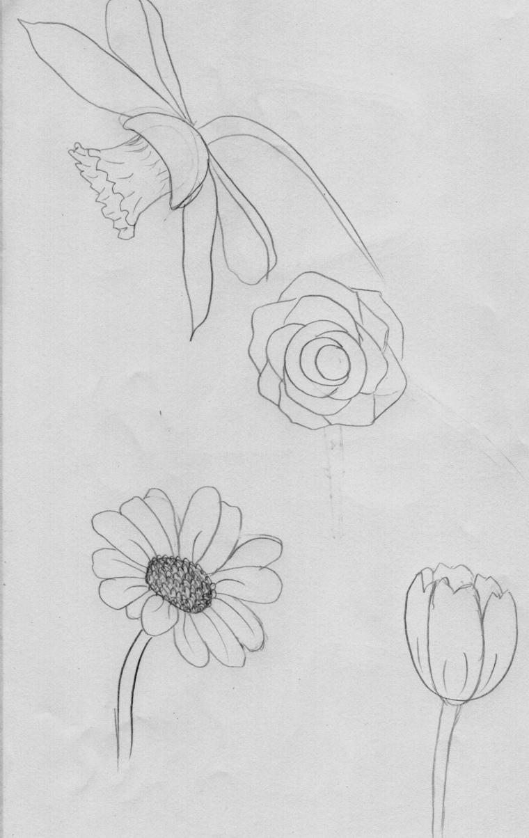 Disegno di un fiore disegnato a matita, disegno di un fiore da colorare