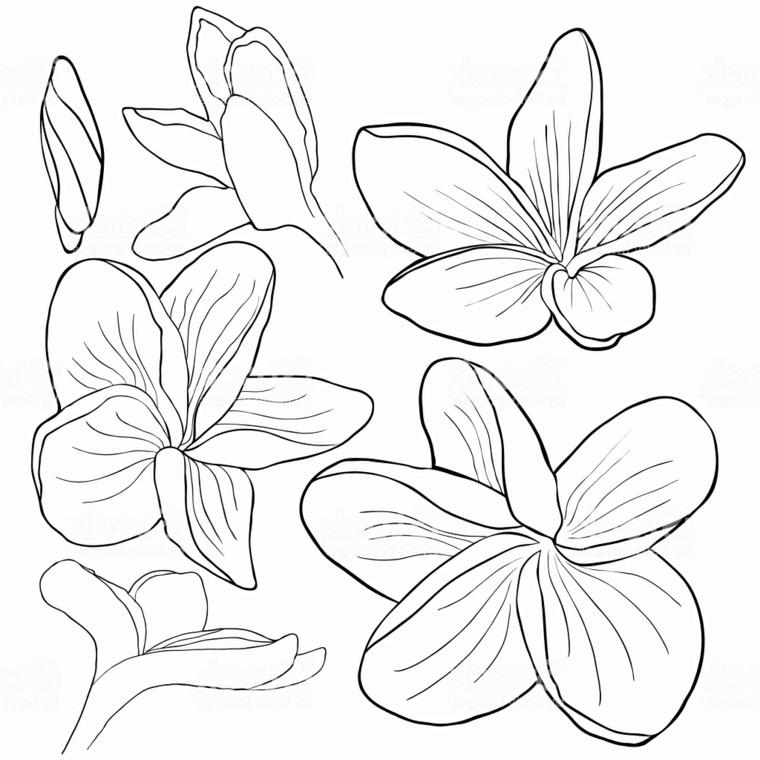Disegno da stampare e colorare, disegno di un'orchidea da colorare