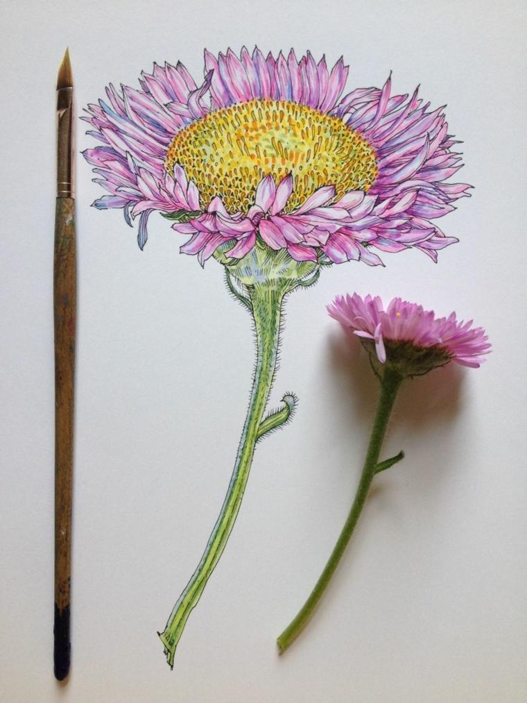 Disegni da colorare fiori, disegno colorato di un fiore con pennello sottile