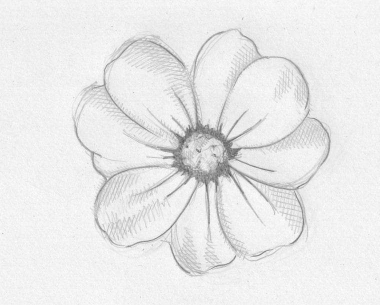 Disegno a matita di un fiore con sfumature, fiori da colorare, disegno su un foglio ruvido