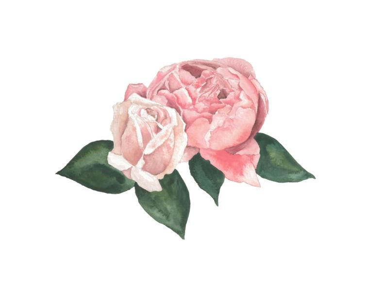 Disegni difficili da colorare, disegno colorato di due rose con foglie verdi