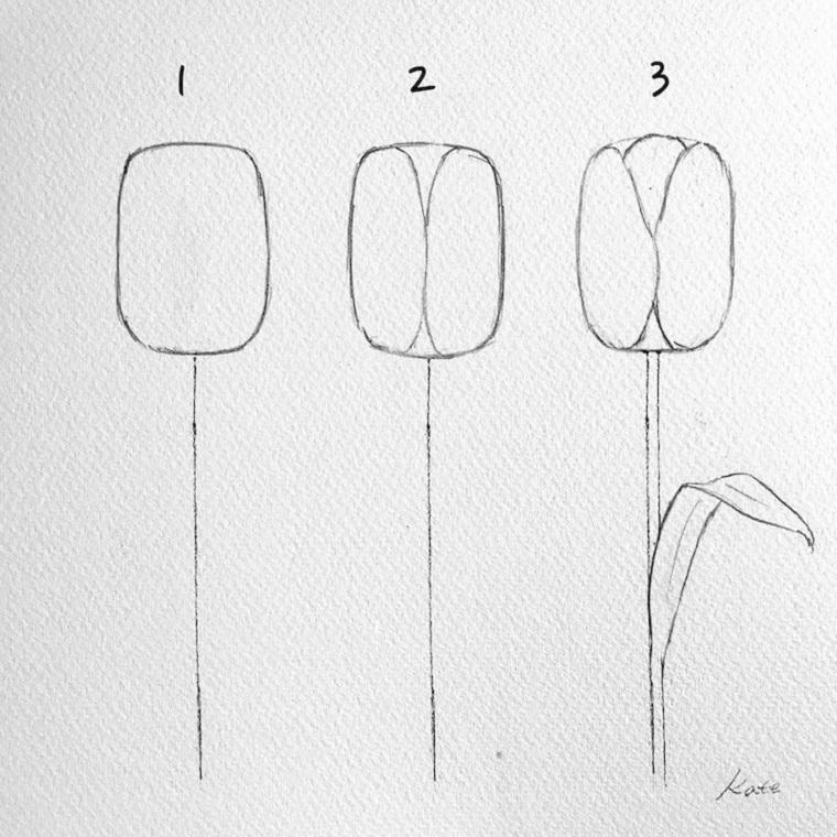 Disegni da colorare fiori, tutorial con disegno a matita di un tulipano con foglie