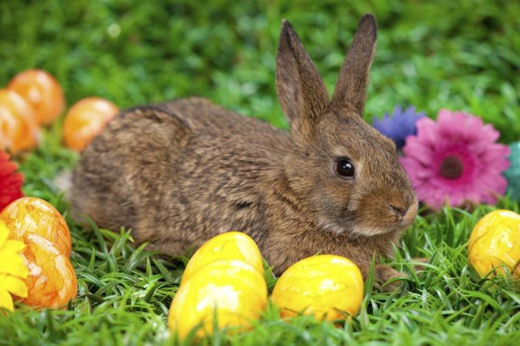 Foto di un coniglio con uova colorate, auguri di buona Pasqua immagini