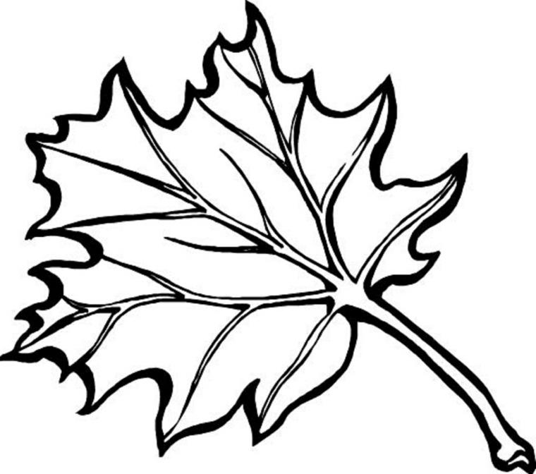 Immagini autunno da colorare, disegno di una foglia di uva da colorare