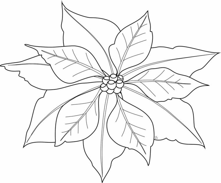 Disegno a matita di una stella di natale da colorare, disegno foglie autunno