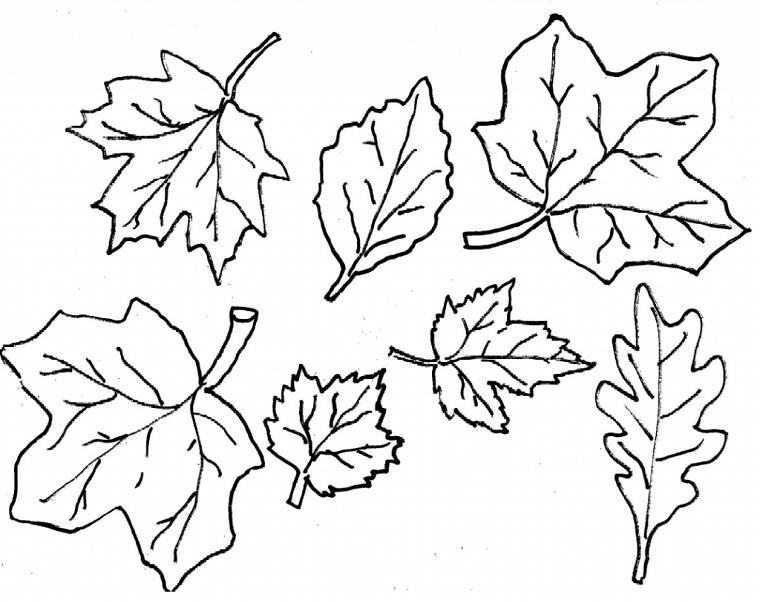 Disegni sull'autunno da colorare e stampare, disegno di foglie autunnali da stampare