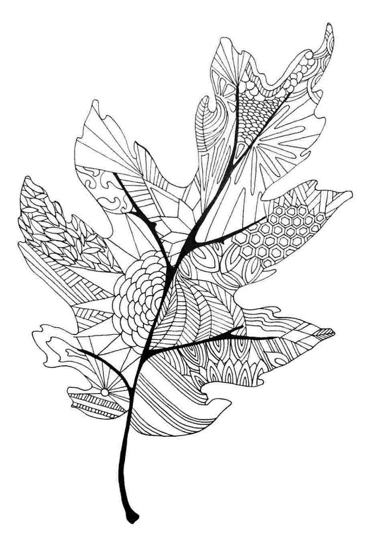 Disegno foglie autunno, disegno di una foglia con disegni da colorare