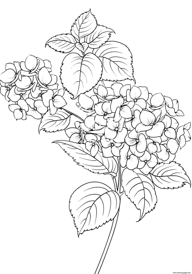 Disegno di una rosa con foglie, disegno di foglie da colorare per bambini