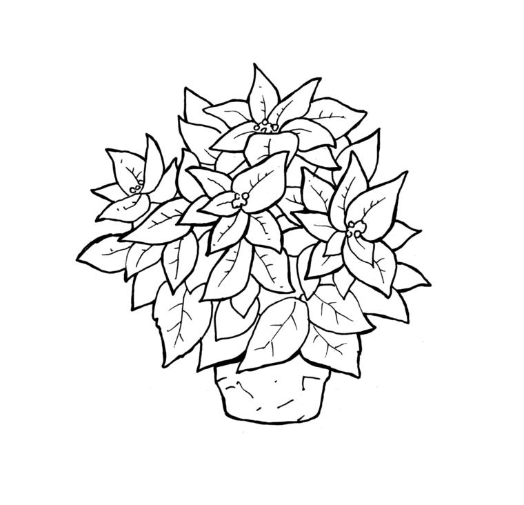 Lavoretti autunnali per bambini, disegno di una stella di natale in vaso