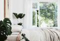 Le piante verdi da appartamento facili da tenere, luce, acqua e cura!