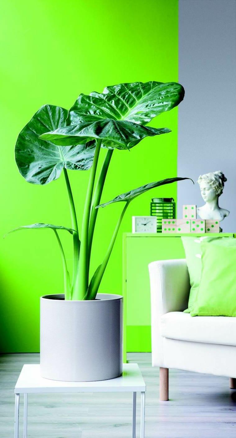 divano parete verde piante che non hanno bisogno di acqua vaso rotondo foglia larga