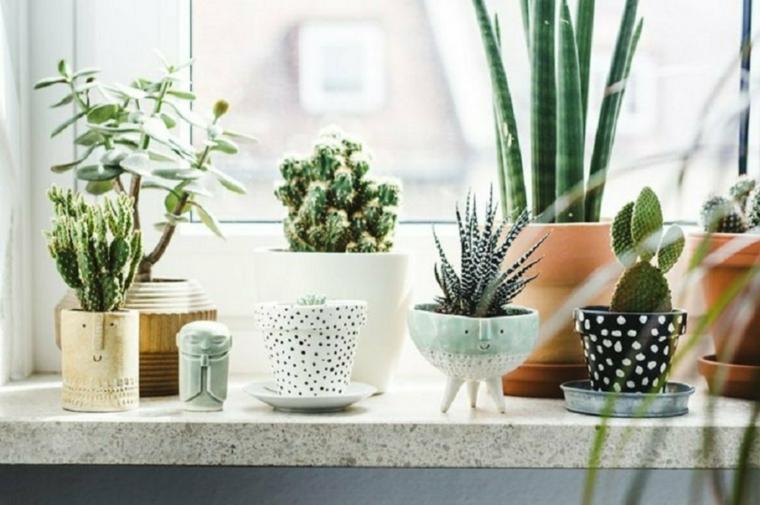 finestra piante grasse con fiori da appartamento vasi aloe vera succulenti