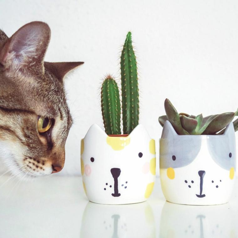 gatto vasi bottiglie di plastica pianta da salotto con foglie rosse e verdi