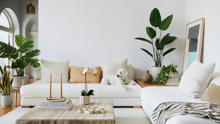 immagini di piante da appartamento resistenti soggiorno divano vasi candele