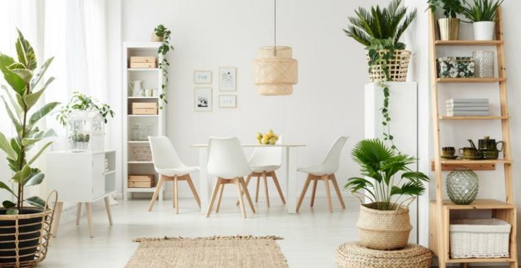 immagini piante da appartamento resistenti tavolo da pranzo sedie vasi mensole