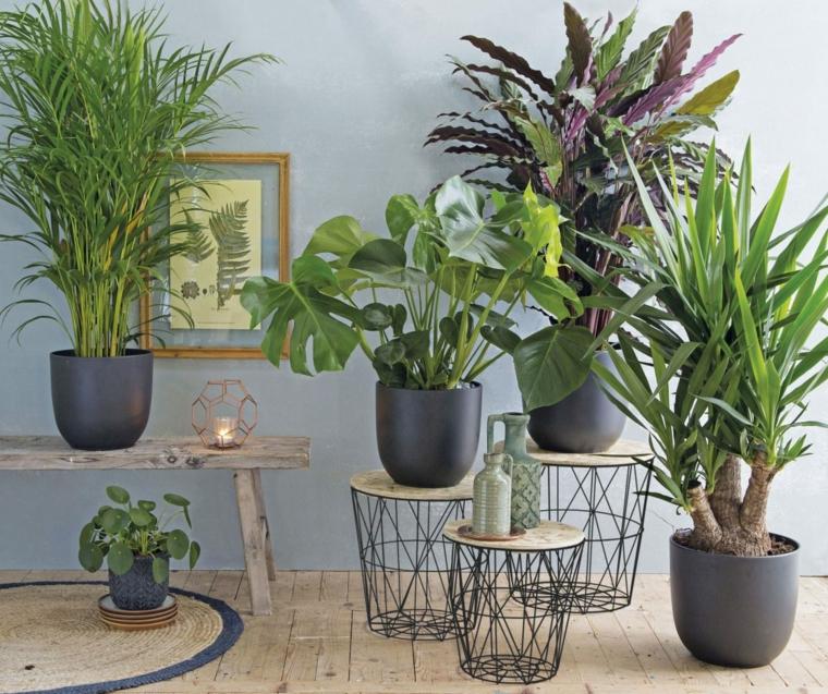 immagini piante da appartamento resistenti vasi tavolini metallo legno panchina soggiorno