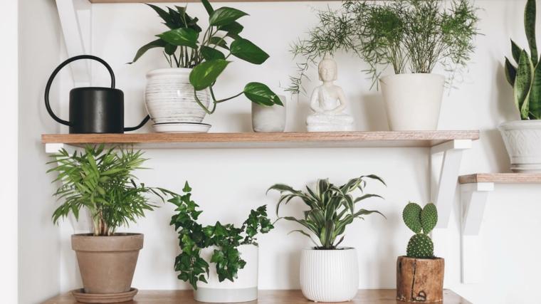 mensola di legno vasi piante eleganti da appartamento foglia verde succulenti