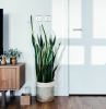 mobile tv vaso piante grasse con fiori da appartamento porta salotto pavimento parquet