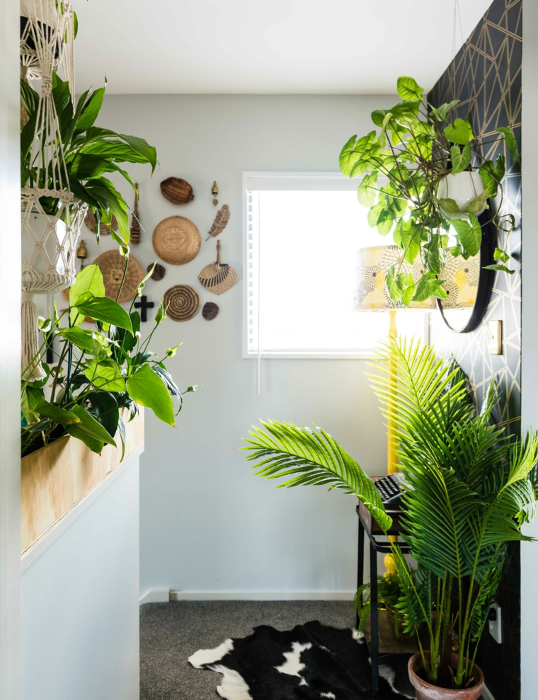 pianta da salotto con foglie rosse e verdi vasi appartamento corridorio finestra luce