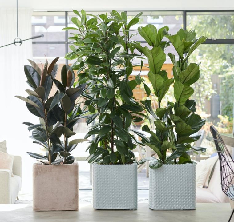 piante foglia larga da appartamento vasi porcellana fiori casa soggiorno finestra luce