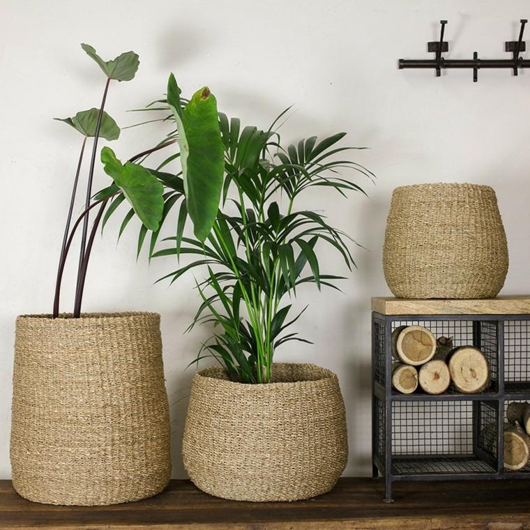 piante ornamentali da interno vasi tessuto panchina tronchetti legno