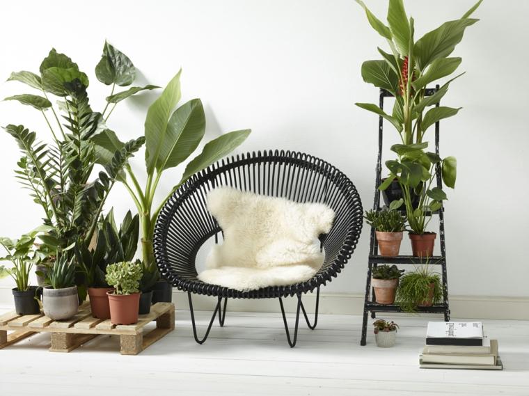 poltrona rattan scala piante da appartamento quali scegliere libri pallet parete bianca