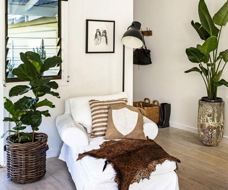soggiorno divano cuscini vasi con piante da interno foglia larga verde cesti intreccio legno